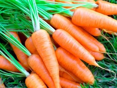 otsenka-dejstviya-preparatov-epin-ekstra-i-tsirkon-na-rost-i-produktivnost-morkovi